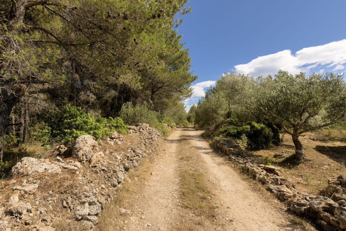 Country road to the Villa Makarac surround with the olive grove